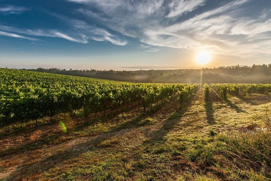 Umbrisch landschap met wijngaard dichtbij de rustieke vakantie appartementen Polmone Turismo Verde