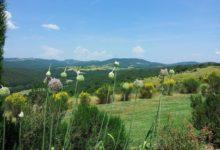 Polmone-Uitzicht-Voorjaar-Brem-Uienbloemen