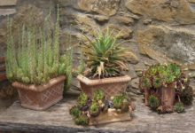 Simpatica-Terras-Vetplanten