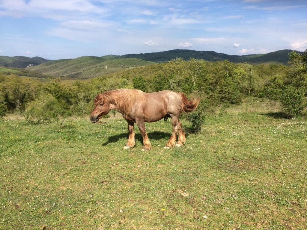 Een wild paard op een van de vele wandelingen