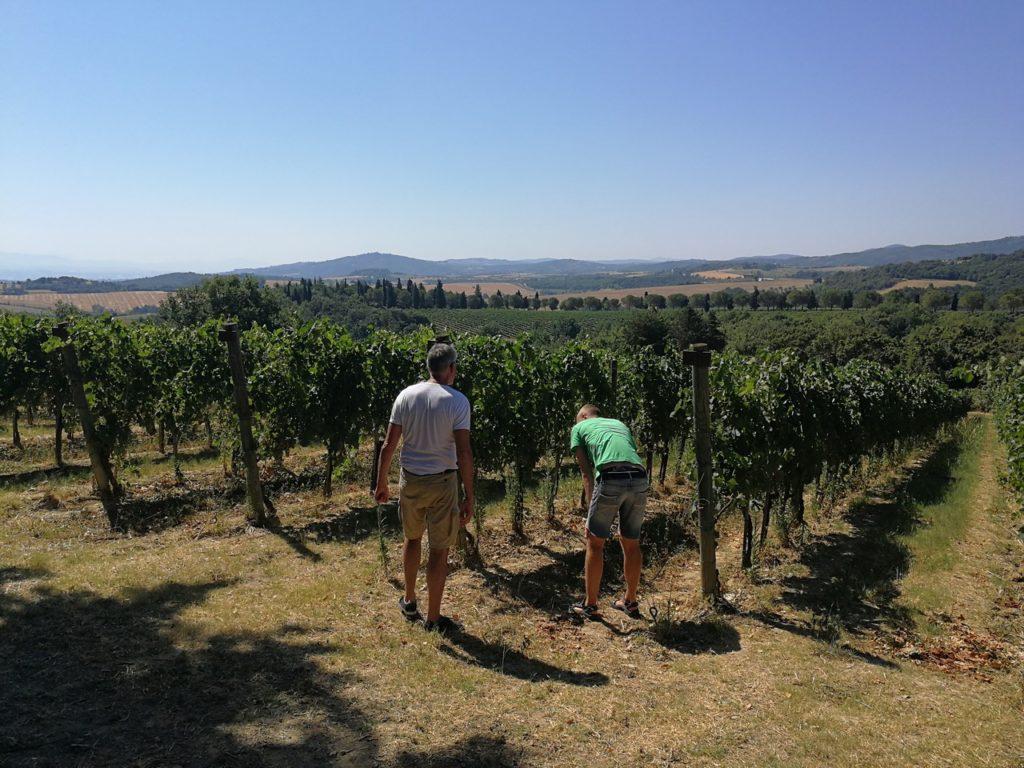 Wijngaarden bekijken bi Montevibiano Vecchio