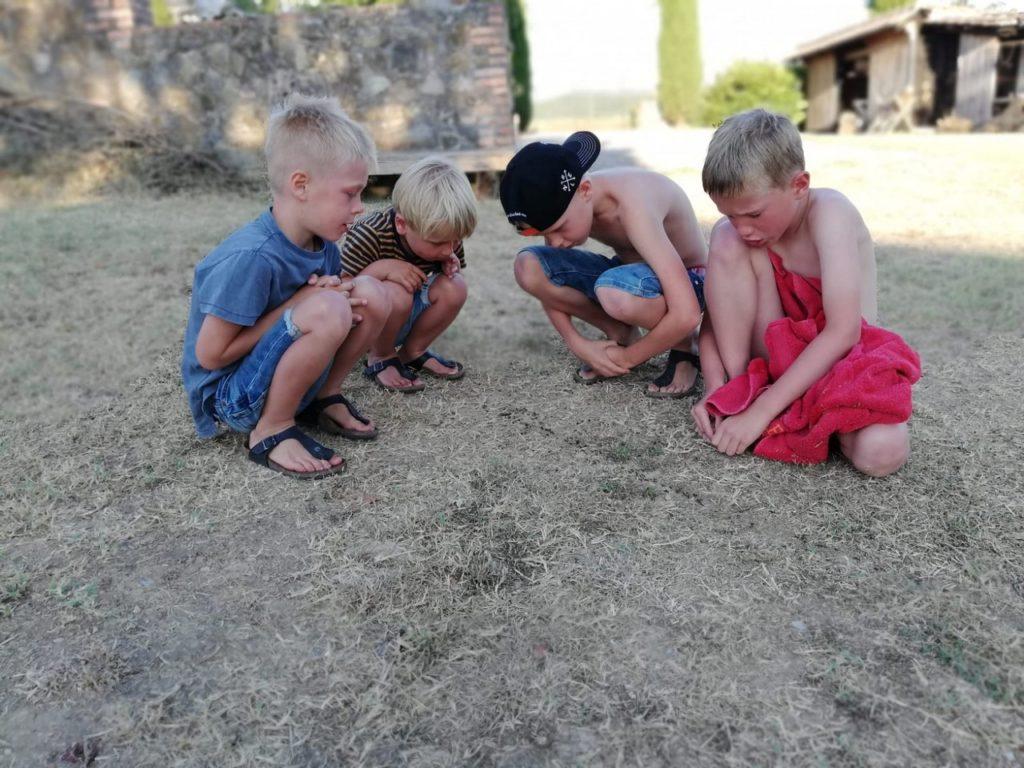 Kinderen ontdekken een mierennest in de zomervakantie
