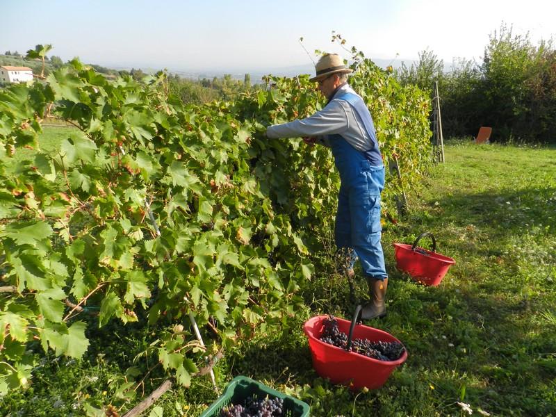 Er is veel diversiteit aan wijn in de regio Umbrië.