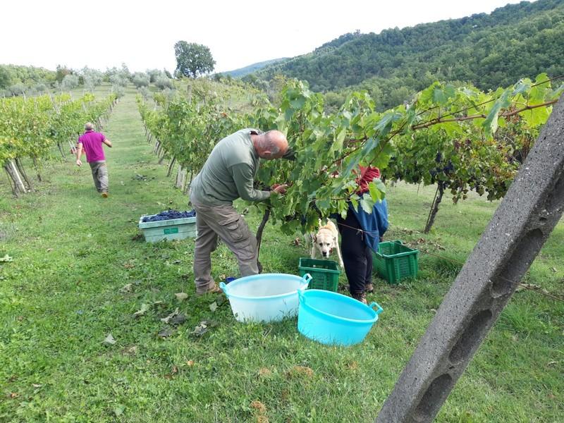Iedereen met een stukje land in de regio Umbrië heeft wel zijn eigen wijnstokken