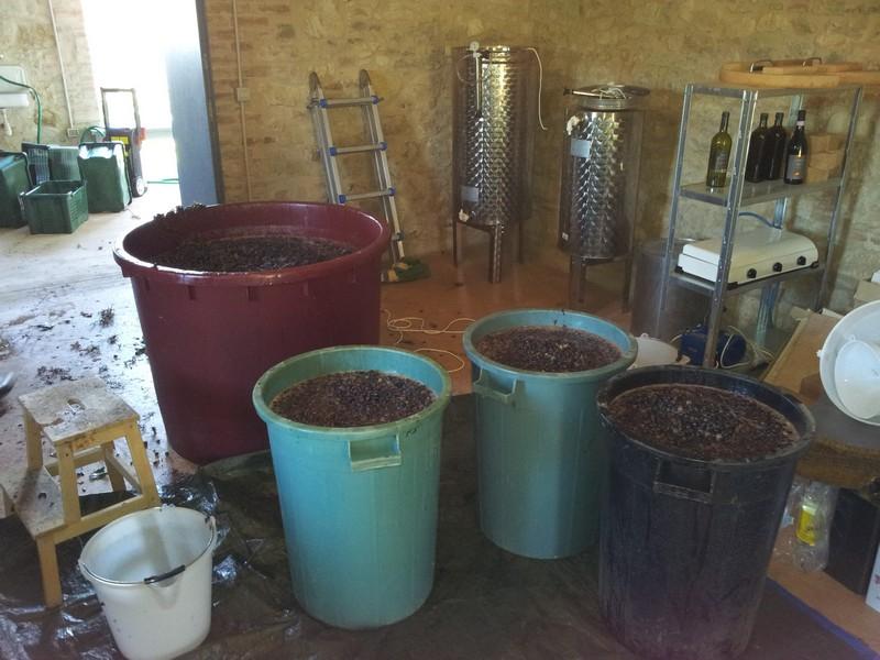 De most staat te fermenteren