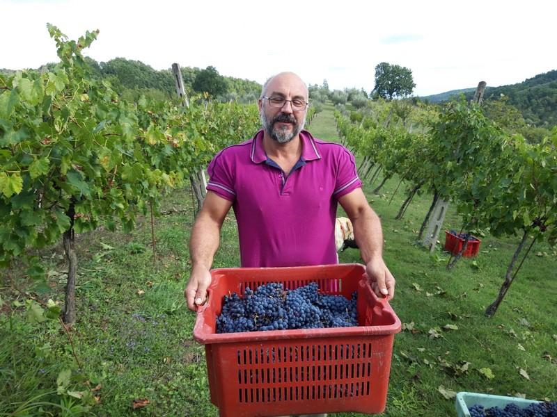 Wijn van de regio Umbrië bij Bio Fattoria Sapio